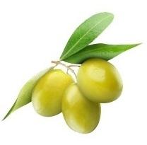Yeşil Zeytinler